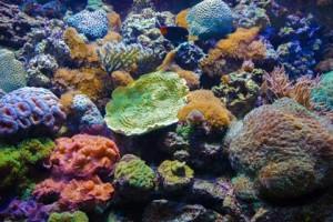 unterwasser-flora